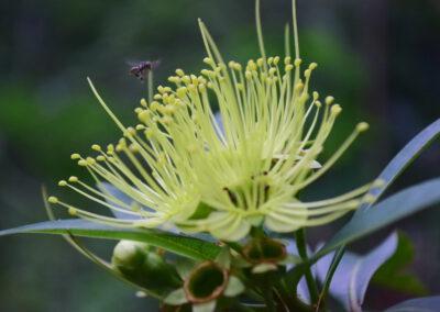 Tanaman Bunga Untuk Pakan Lebah