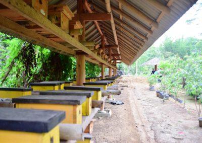 Peternakan Tawon Madu